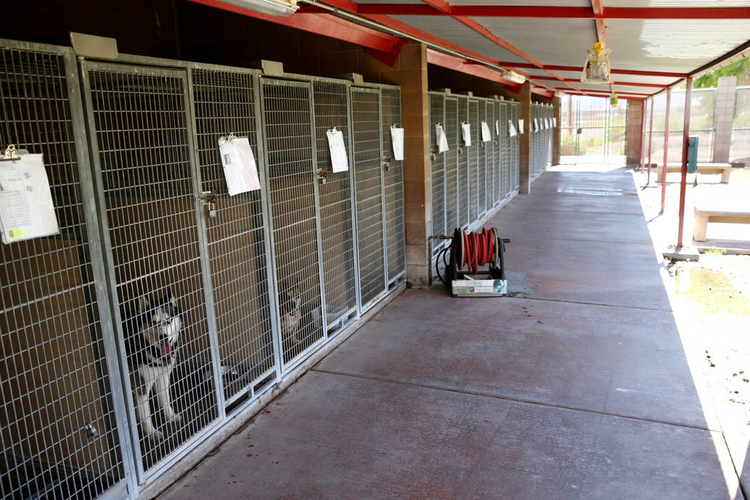 Dogs up for adoption at Henderson Animal Care and Control, Tuesday, July 24, 2018. K.M. Cannon Las Vegas Review-Journal @KMCannonPhoto