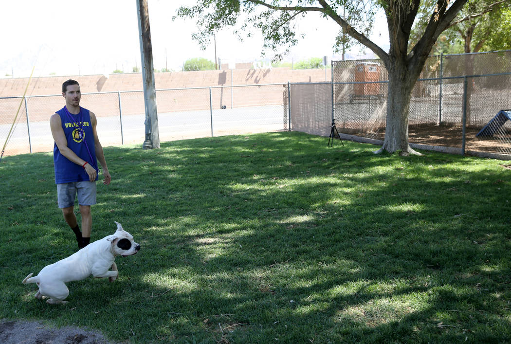 Caine gets some exercise with volunteer Mike Perry while waiting to be adopted at Henderson Animal Care and Control, Tuesday, July 24, 2018. K.M. Cannon Las Vegas Review-Journal @KMCannonPhoto