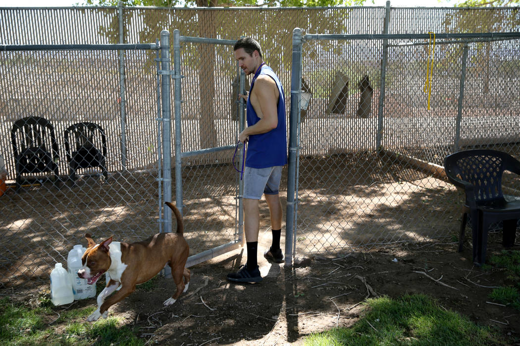 Derby gets some exercise with volunteer Mike Perry while waiting to be adopted at Henderson Animal Care and Control, Tuesday, July 24, 2018. K.M. Cannon Las Vegas Review-Journal @KMCannonPhoto