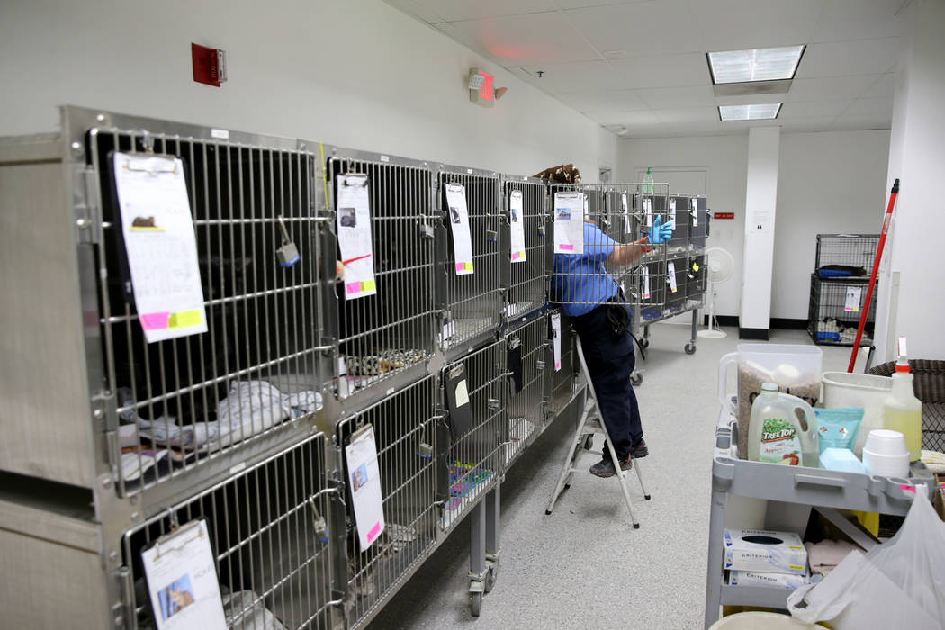 Kennel attendant Robin Adamson cleans cages of animals waiting to be adopted at Henderson Animal Care and Control, Tuesday, July 24, 2018. K.M. Cannon Las Vegas Review-Journal @KMCannonPhoto