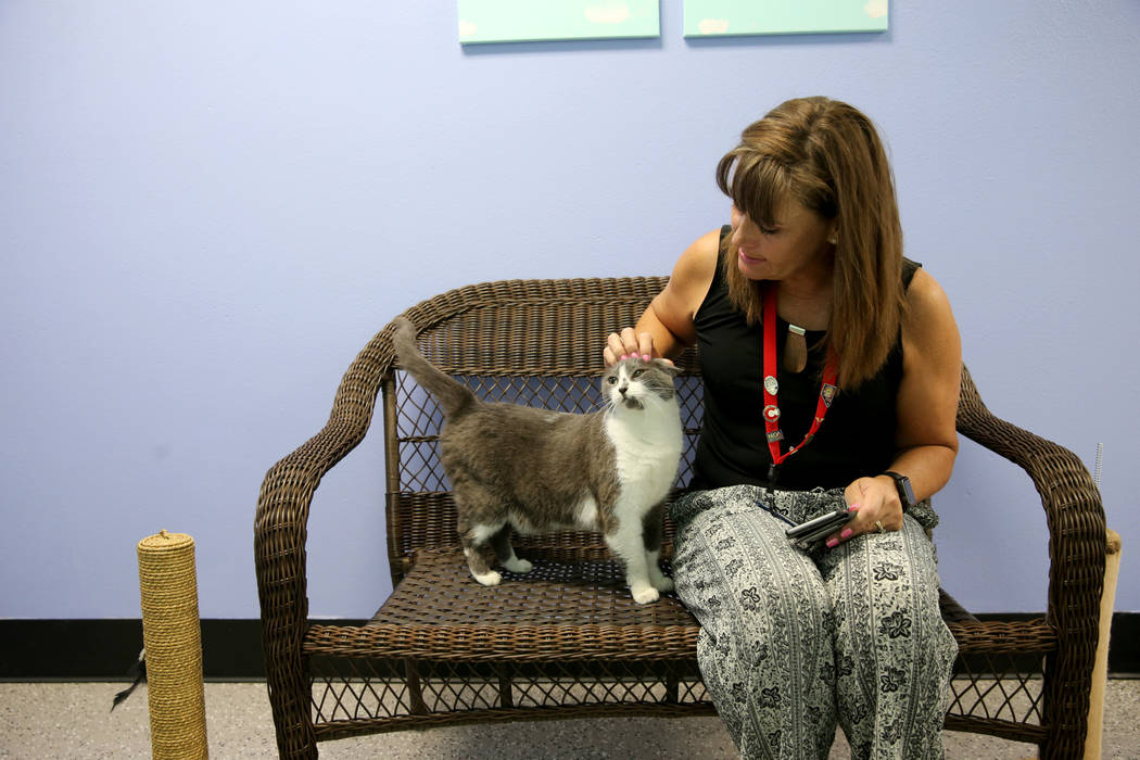 An 8-year-old domestic shorthair waits to be adopted at Henderson Animal Care and Control with Michelle French, senior marketing information officer with the City of Henderson, Tuesday, July 24, 2 ...