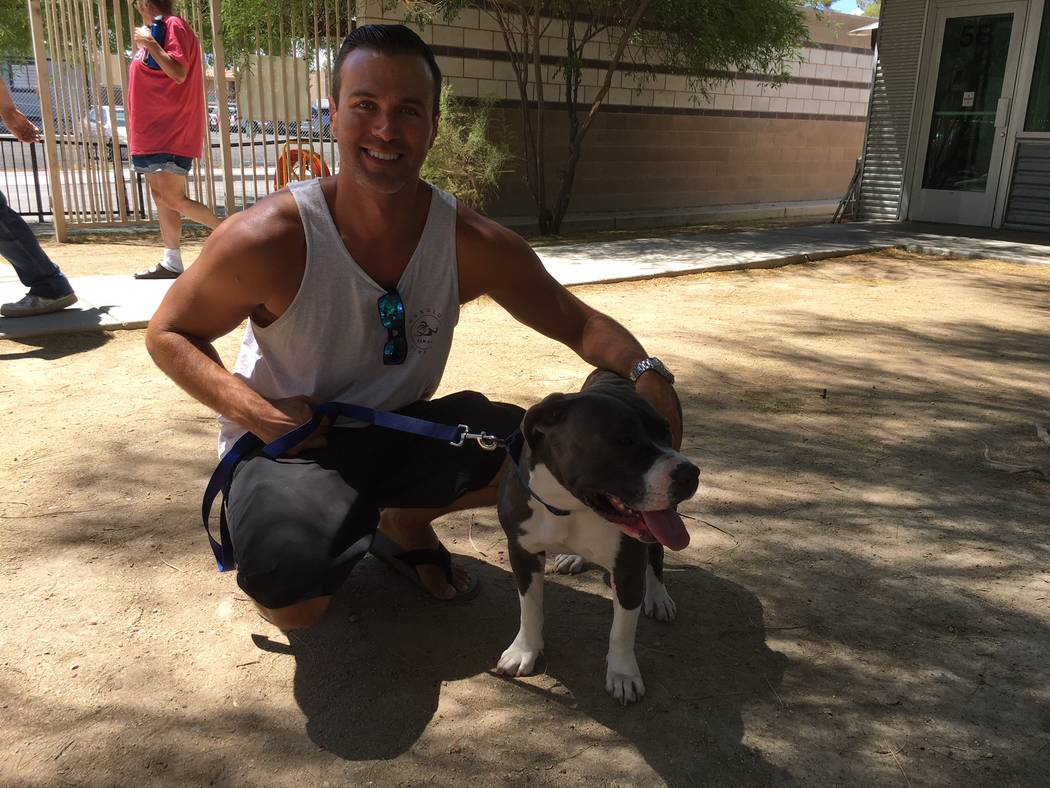 Cristian Salas, a foster caretaker in the Animal Foundation's foster program, has been caring for Rosie, a 3-year-old American pit bull terrier, for about two months. (John Przybys/Las Vegas Revie ...