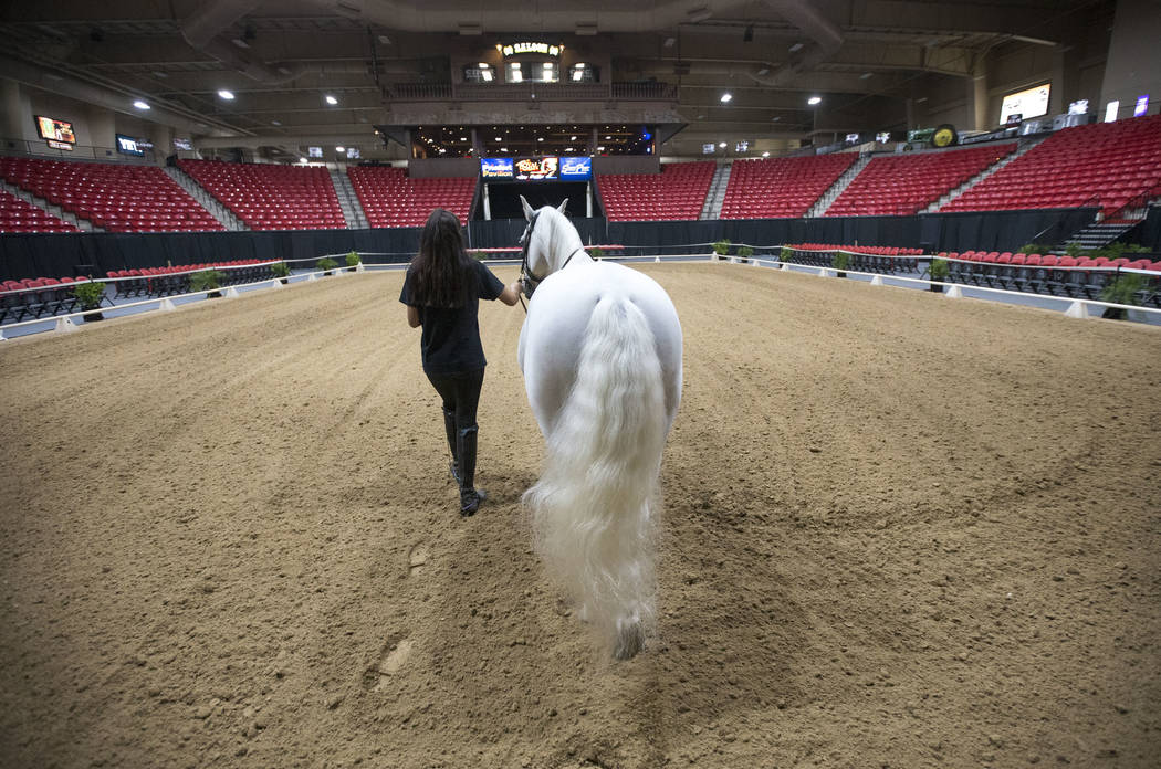 Australian horse rider Katharina Gasser, 20, get her Lipizzaner stallion Mozart in position ahead of a demonstration at the South Point Arena & Equestrian Center on Thursday, Aug. 2, 2018. Ric ...