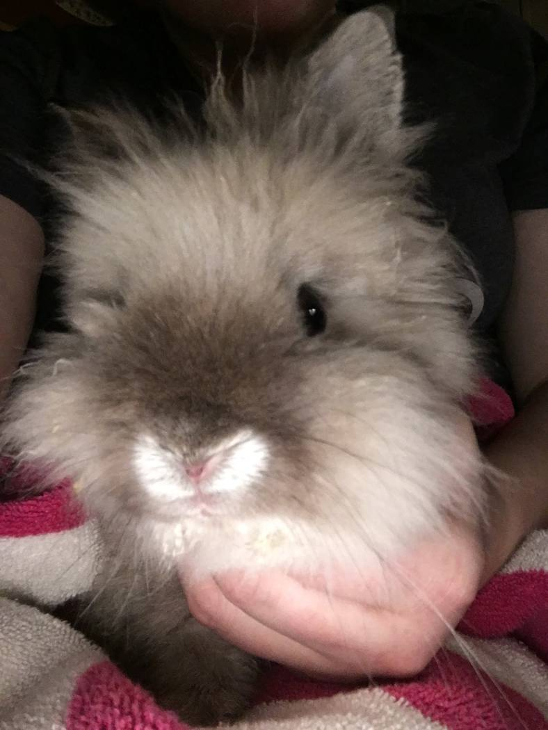 Lt. Dan, a lionhead rabbit. (All Creatures Sanctuary)