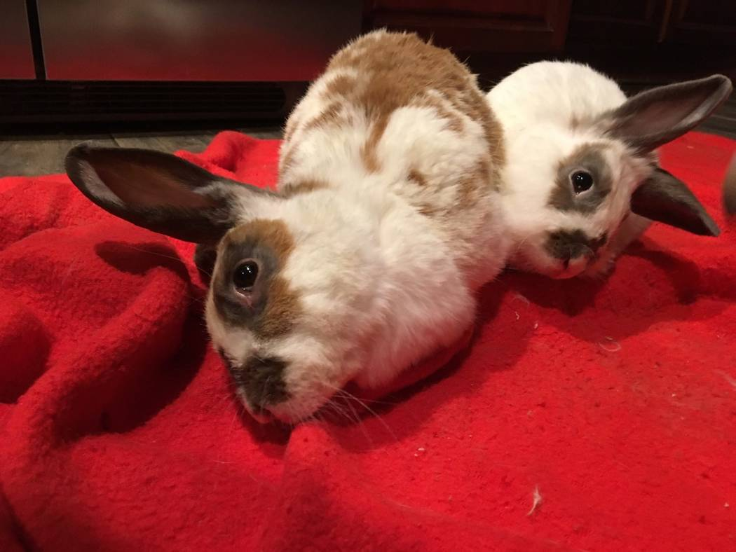Bun bun and Bowie. (All Creatures Sanctuary)