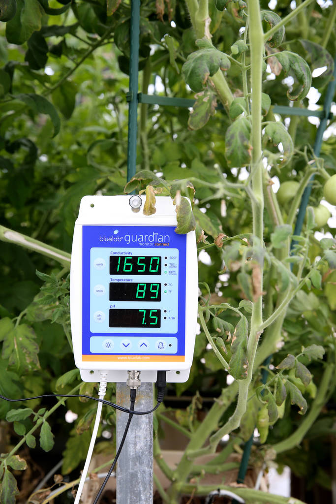 Electrical conductivity, temperature and pH are monitored in Williams Research Greenhouse at Faith Lutheran Middle School and High School in Las Vegas Friday, Aug. 10, 2018. K.M. Cannon Las Vegas ...