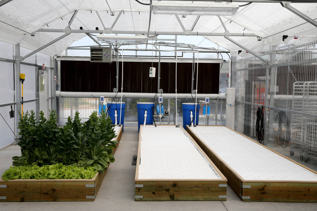 Lettuce is grown in a raft system in Williams Research Greenhouse at Faith Lutheran Middle School and High School in Las Vegas Friday, Aug. 10, 2018. K.M. Cannon Las Vegas Review-Journal @KMCannon ...