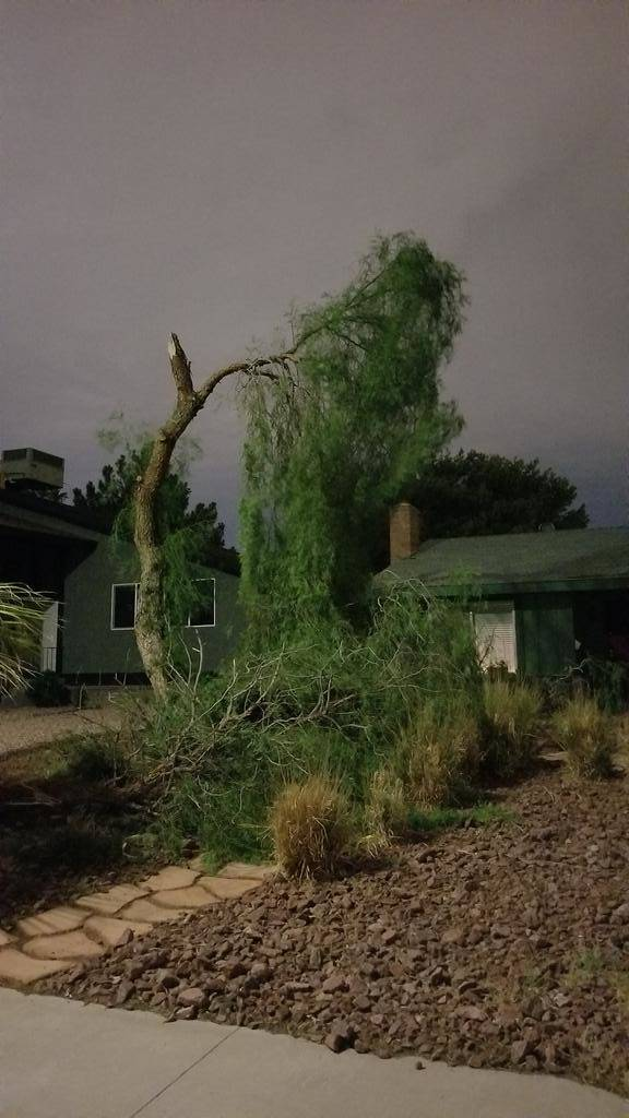 A damaged tree in the 6700 block of Greengrove Drive in Las Vegas (Courtesy of Bryan Herbert)