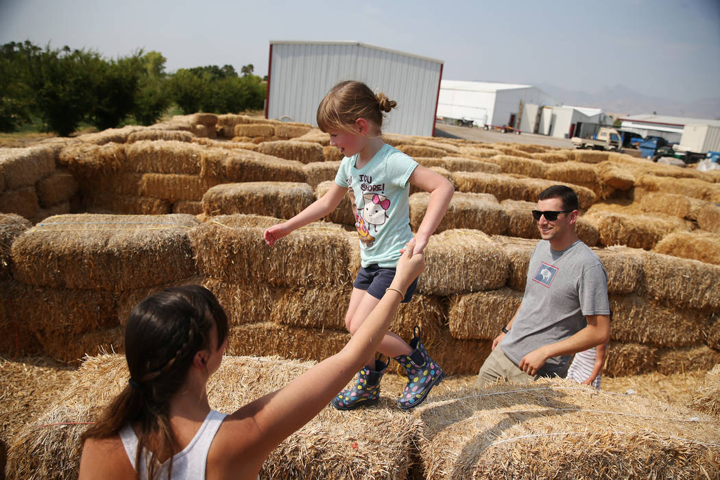 Kristina Regan, left, with her daughter Allie, 4, and husband Kristian play in the maze at Gilcrease Orchard in Las Vegas, Saturday, Aug. 11, 2018. Erik Verduzco Las Vegas Review-Journal @Erik_Ver ...
