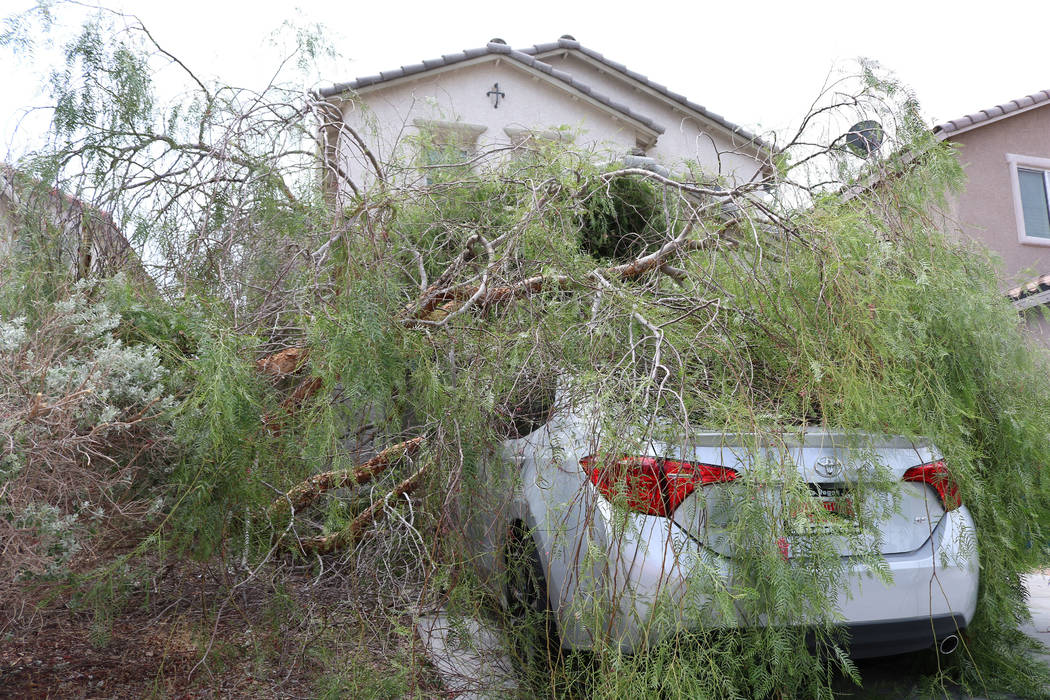 During Saturday night's storm in the Las Vegas Valley, a tree fell on Jessica Murray's new car. The 37-year-old said she and her sister noticed the tree from their neighbor's yard had fell around ...