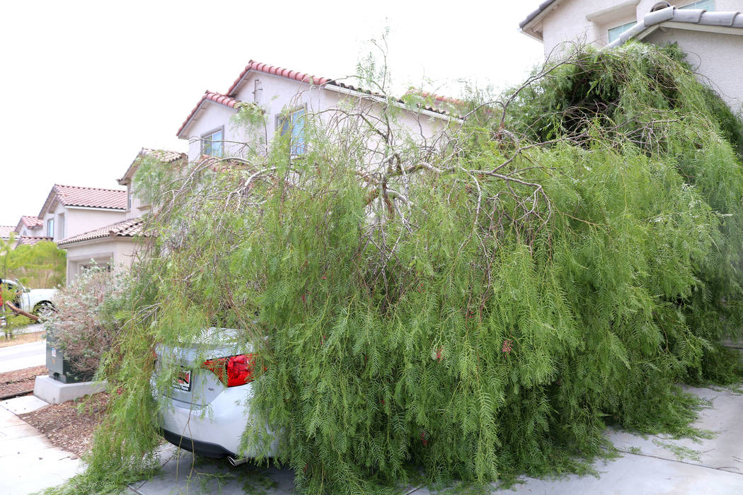 During Saturday night's storm in the Las Vegas Valley, a tree fell on Jessica Murray's new car. The 37-year-old said she and her sister noticed the tree from their neighbor's yard had fallen aroun ...