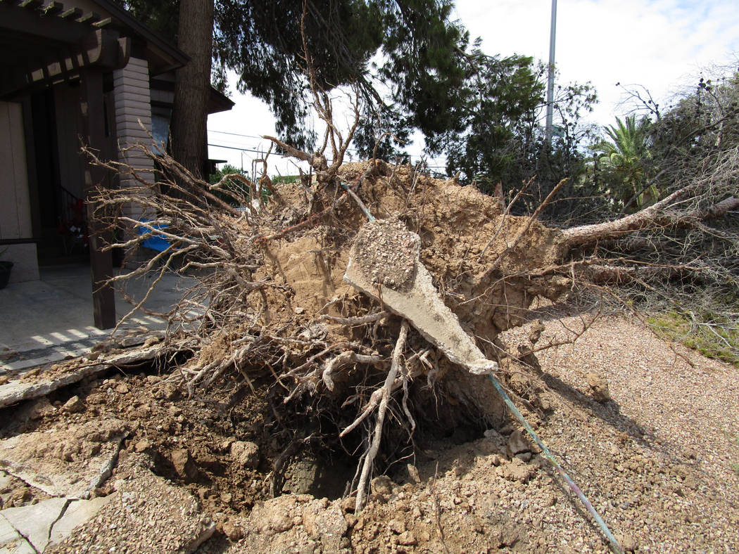A tree uprooted by Saturday night's winds lies in the front yard of a house in east Las Vegas near Charleston Boulevard and Nellis Boulevard on Sunday, August 12, 2018. (Greg Haas/Las Vegas Revi ...