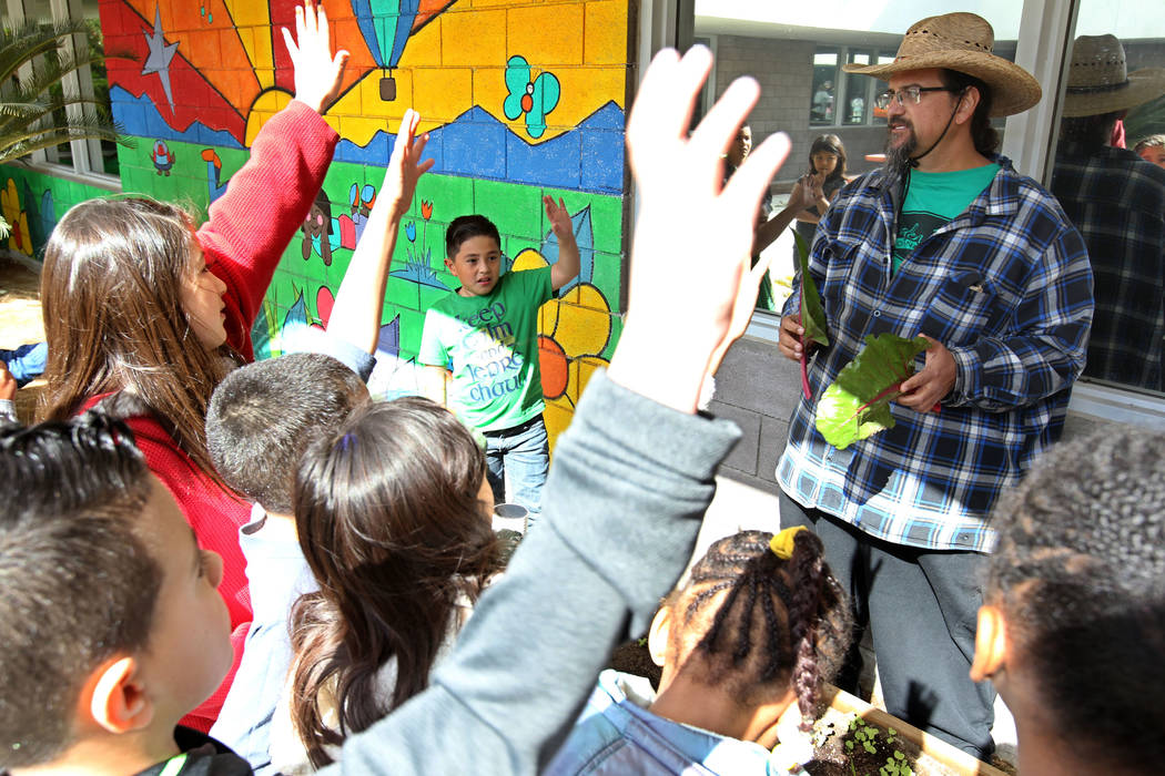 Enrique Garcia with Garden Farms teaches third-grade students at Woolley Elementary School about Ruby Red chard grown in the Las Vegas school's garden Monday, Feb. 12, 2018. K.M. Cannon Las Vegas ...