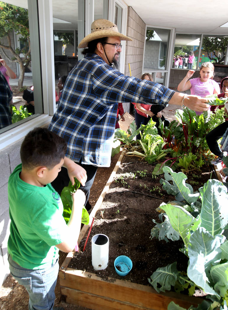Enrique Garcia with Garden Farms hands out Ruby Red chard to third-grade students at Woolley Elementary School in the Las Vegas school's garden Monday, Feb. 12, 2018. K.M. Cannon Las Vegas Review- ...