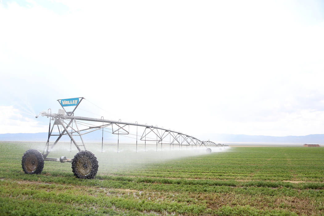 Water sprays on a hay field on Aug. 7, 2017, at a ranch owned by the Southern Nevada Water Authority in White Pine County's Spring Valley. (Las Vegas Review-Journal)