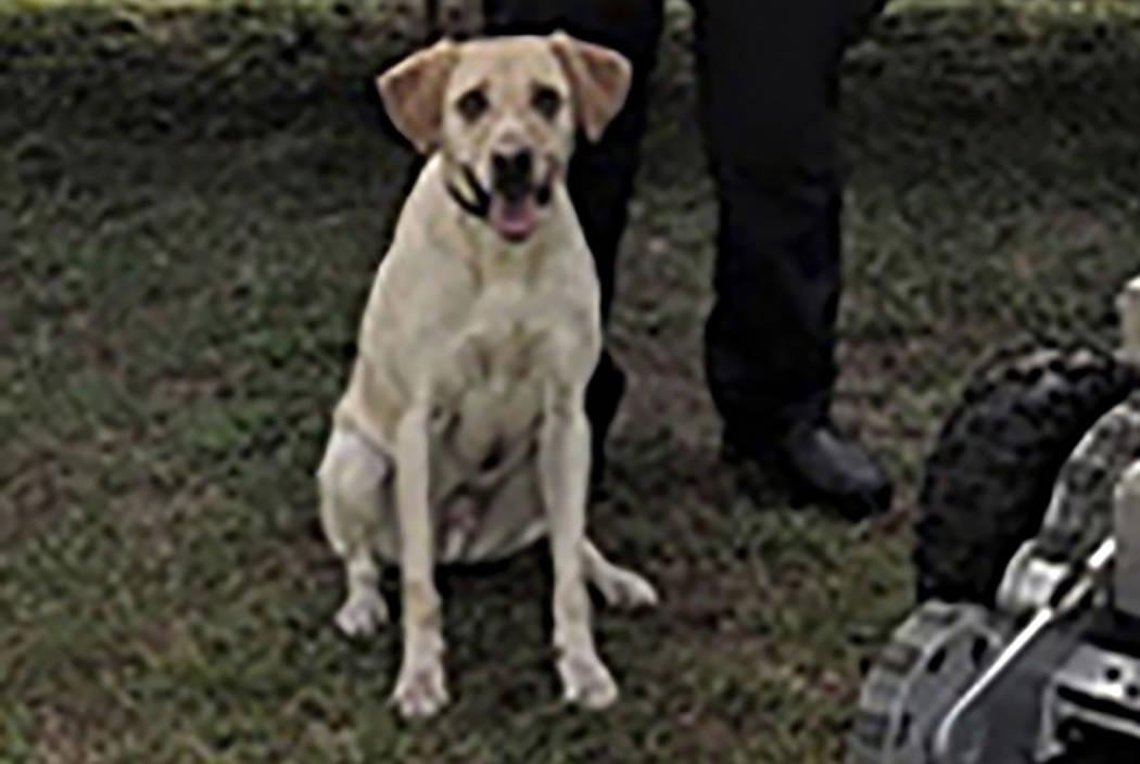 "Police dog ""Turbo"" (Columbia, S.C. Police Department via AP)"
