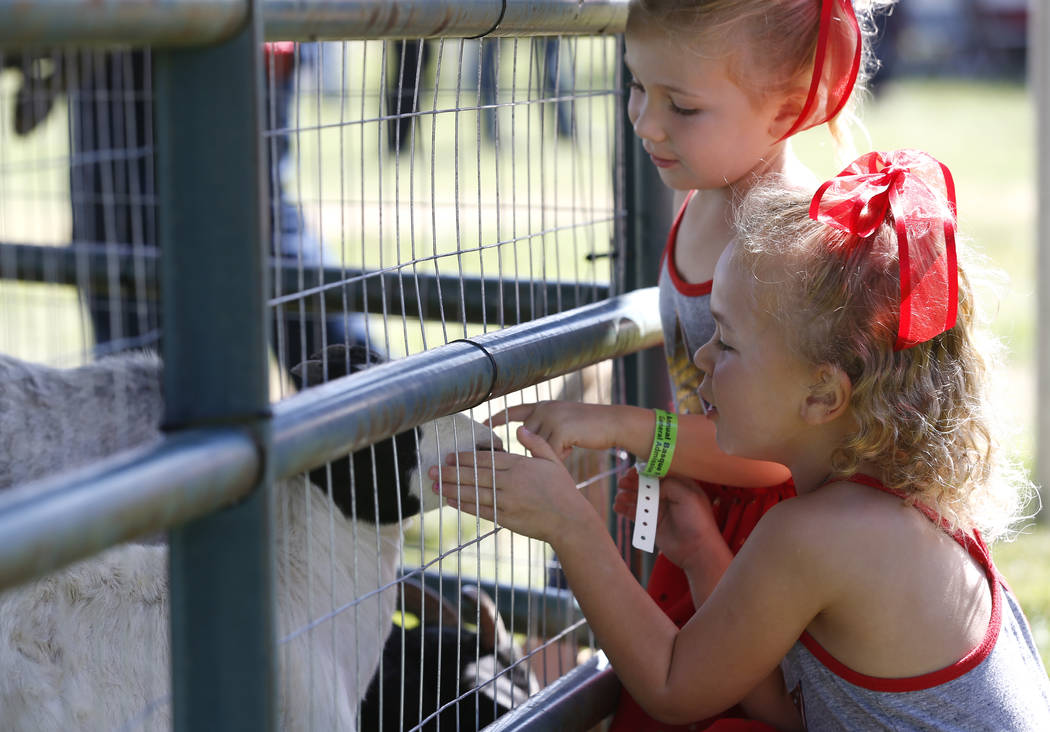 Abigail DiLorento, 5, and her sister Madison, 3, pet goats at the 4th annual Basque Fry in Gardnerville, Nev., on Saturday, Aug. 25, 2018. Hosted by the Morning in Nevada PAC, the event is a fundr ...
