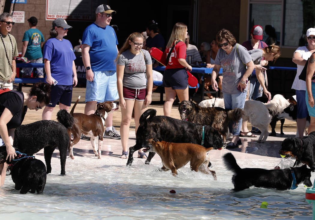 "Dogs enjoy the annual ""Dog Daze of Summer"" event at Desert Breeze Aquatics Facility as their owners look on Saturday, Sept. 1, 2018, in Las Vegas. (Bizuayehu Tesfaye/Las Vegas Review ..."