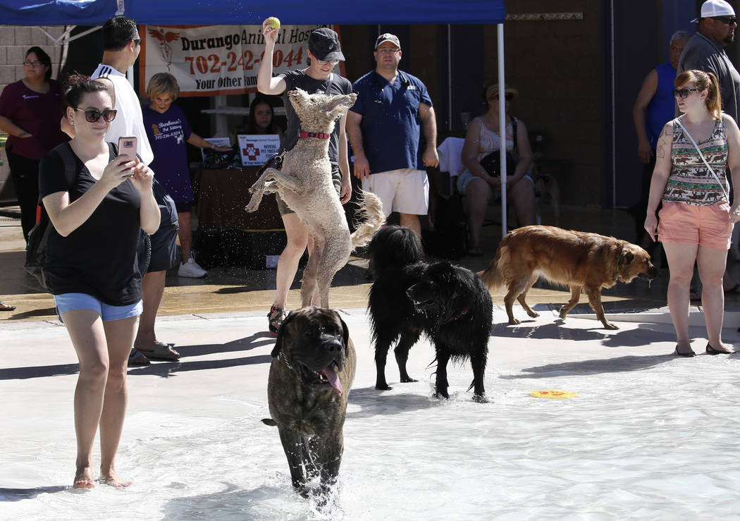 "Dogs enjoy the annual ""Dog Daze of Summer"" event at Desert Breeze Aquatics Facility as their owners, including Samantha Geller, left, look on Saturday, Sept. 1, 2018, in Las Vegas. ..."