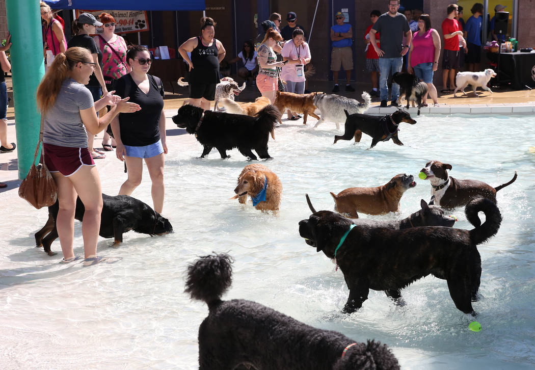 "Dogs enjoy the annual ""Dog Daze of Summer"" event at Desert Breeze Aquatics Facility as their owners, including Taba Ferraris, left, and Samantha Geller look on Saturday, Sept. 1, 201 ..."