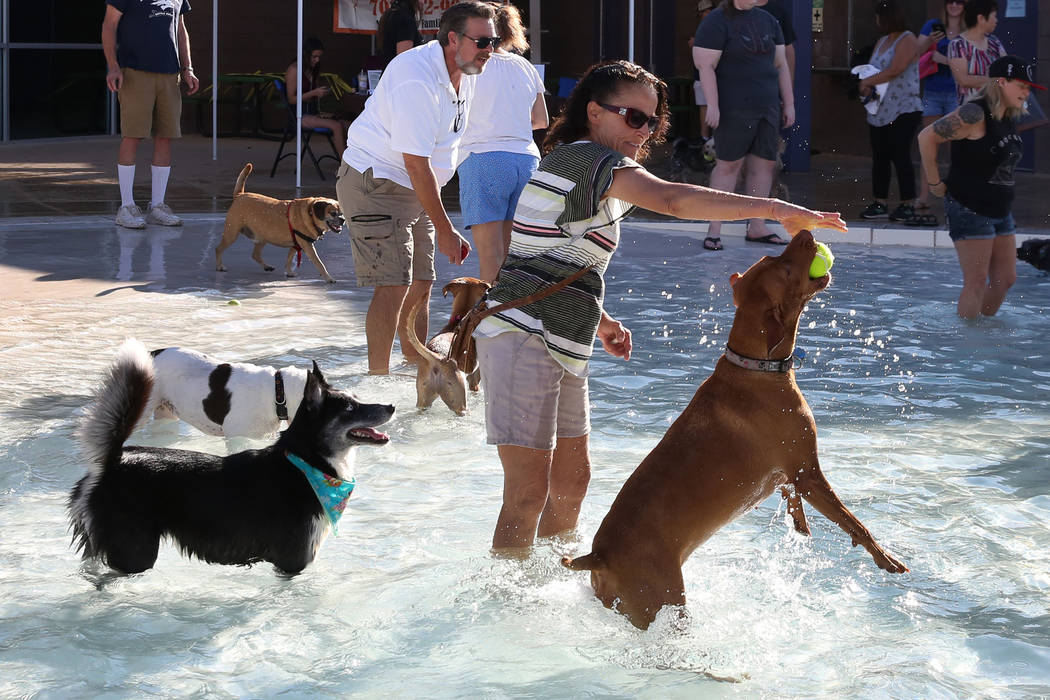 "Vera Bojack plays with her dog Sedona, right, during the annual ""Dog Daze of Summer"" event at Desert Breeze Aquatics Facility on Saturday, Sept. 1, 2018, in Las Vegas. (Bizuayehu Tes ..."