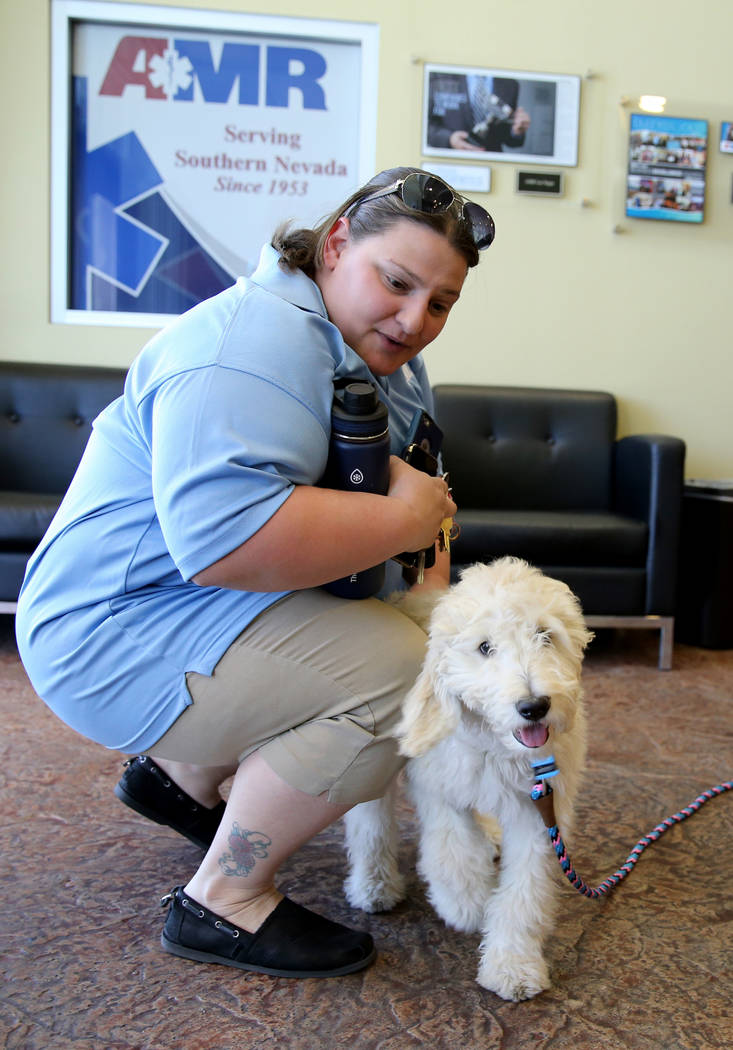 Mercy, a therapy dog in training, visits with Recruiting Coordinator Nicole Rusheen at American Medical Response and MedicWest headquarters in Las Vegas Wednesday, Sept. 5, 2018. K.M. Cannon Las V ...