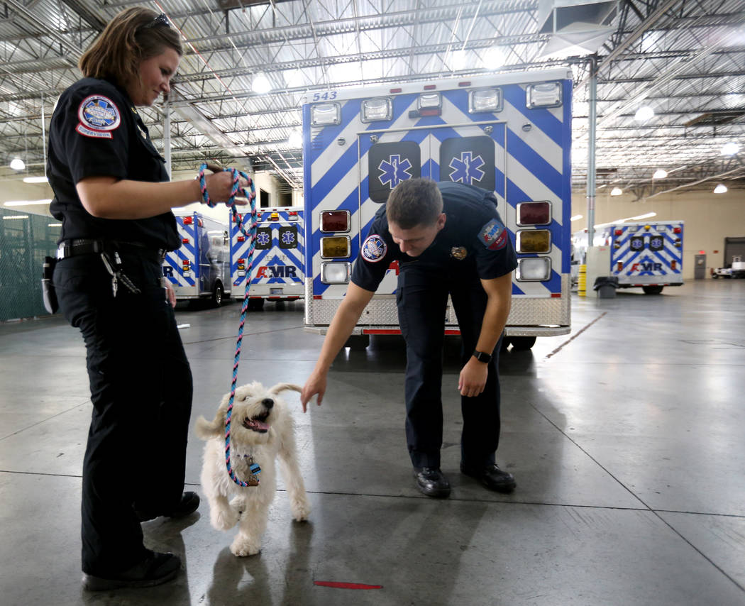 Trainer Megan LeClair, left, and Mercy, a therapy dog in training, visit with EMT Ryan Simone at American Medical Response and MedicWest headquarters in Las Vegas Wednesday, Sept. 5, 2018. K.M. Ca ...
