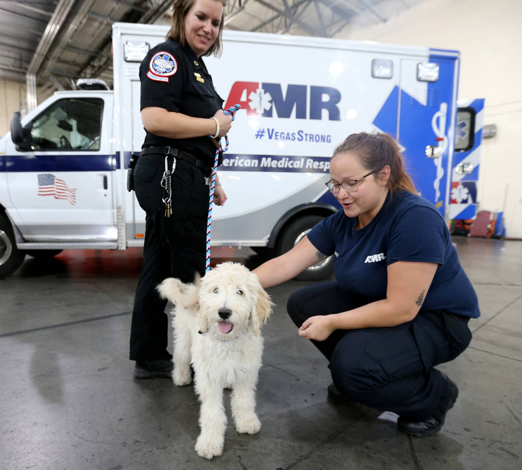 Trainer Megan LeClair, left, and Mercy, a therapy dog in training, visits with Vehicle Service Technician Gianna Venezia at American Medical Response and MedicWest headquarters in Las Vegas Wednes ...
