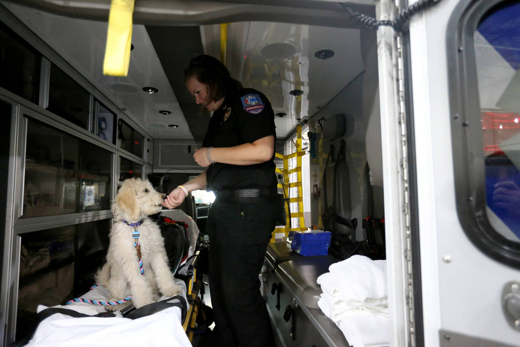 Trainer Megan LeClair works with Mercy, a therapy dog in training, at American Medical Response and MedicWest headquarters in Las Vegas Wednesday, Sept. 5, 2018. K.M. Cannon Las Vegas Review-Journ ...