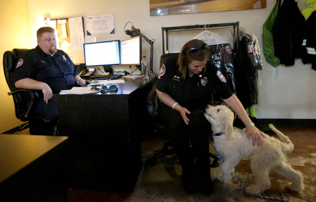 Trainer Megan LeClair works with Mercy, a therapy dog in training, at American Medical Response and MedicWest headquarters in Las Vegas Wednesday, Sept. 5, 2018. Looking on is Operations Superviso ...