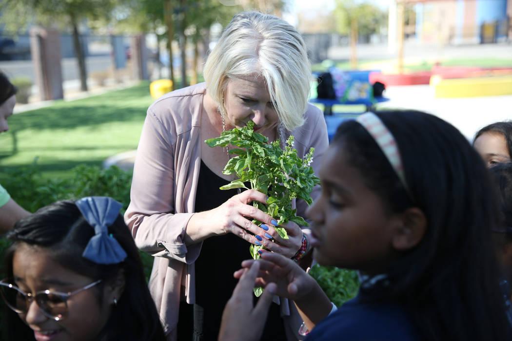 Gina Gavan, center, founder of Project Dinner Table, smells fresh basil from the Hollingsworth Elementary School garden in Las Vegas, Friday, Sept. 7, 2018.ErikVerduzcoLas Vegas ...