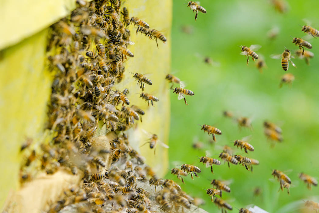 Bees entering a beehive (Getty Images)