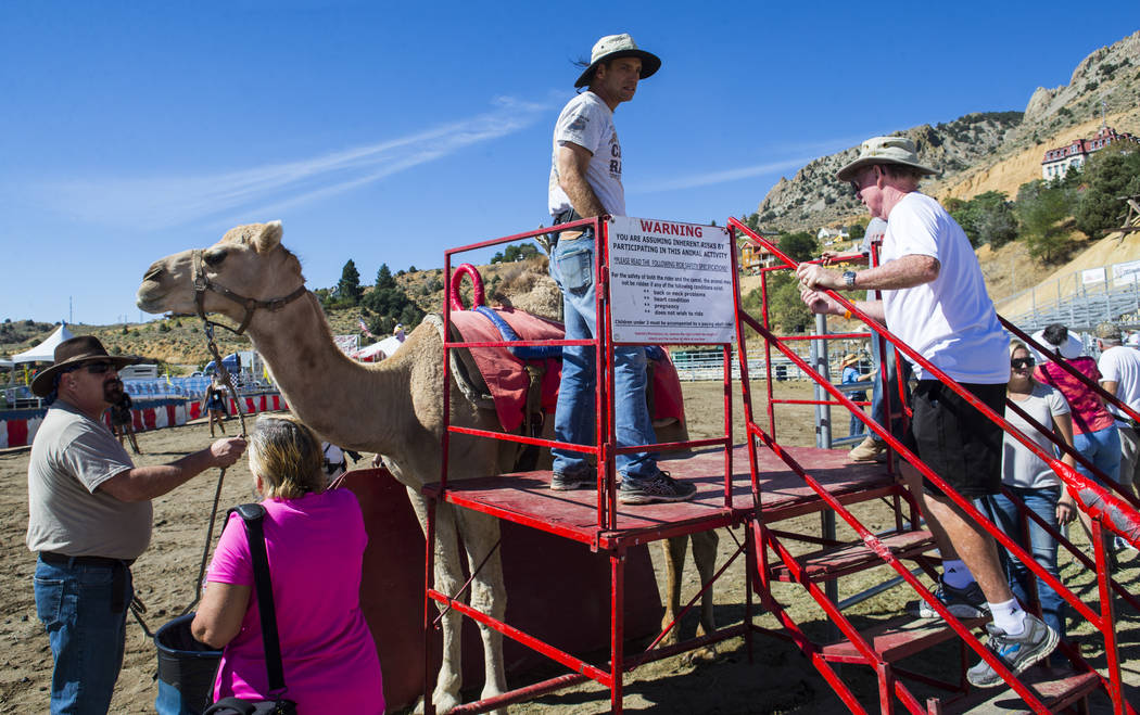 Ed Dillon of Lincoln, Calif., right, prepares to ride a camel during the first day of the 59th annual International Camel & Ostrich Races in Virginia City on Friday, Sept. 7, 2018. Chase Stevens L ...
