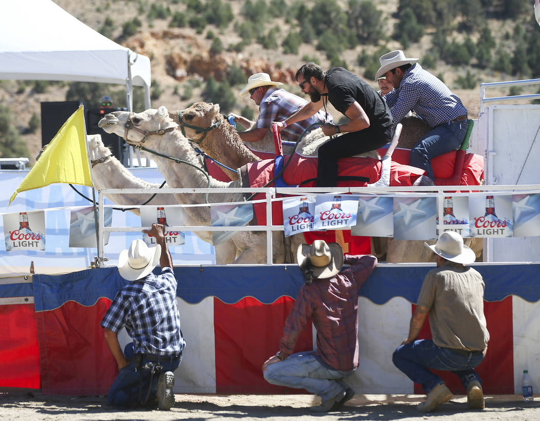 Camel race participants take off during the first day of the 59th annual International Camel & Ostrich Races in Virginia City on Friday, Sept. 7, 2018. Chase Stevens Las Vegas Review-Journal @csst ...