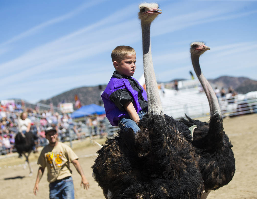 Ten-year-old Lian Hendrick races an ostrich during the first day of the 59th annual International Camel & Ostrich Races in Virginia City on Friday, Sept. 7, 2018. Chase Stevens Las Vegas Review-Jo ...