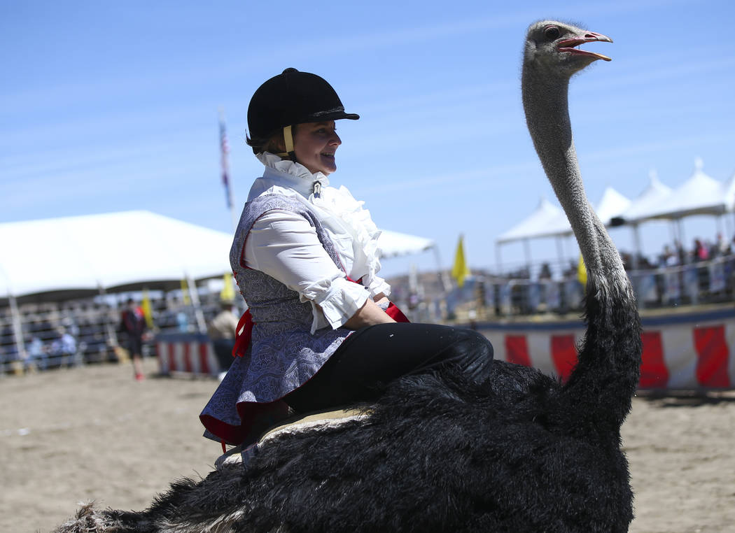 Liz Dickey of Mancos, Colo., races an ostrich during the first day of the 59th annual International Camel & Ostrich Races in Virginia City on Friday, Sept. 7, 2018. Chase Stevens Las Vegas Review- ...