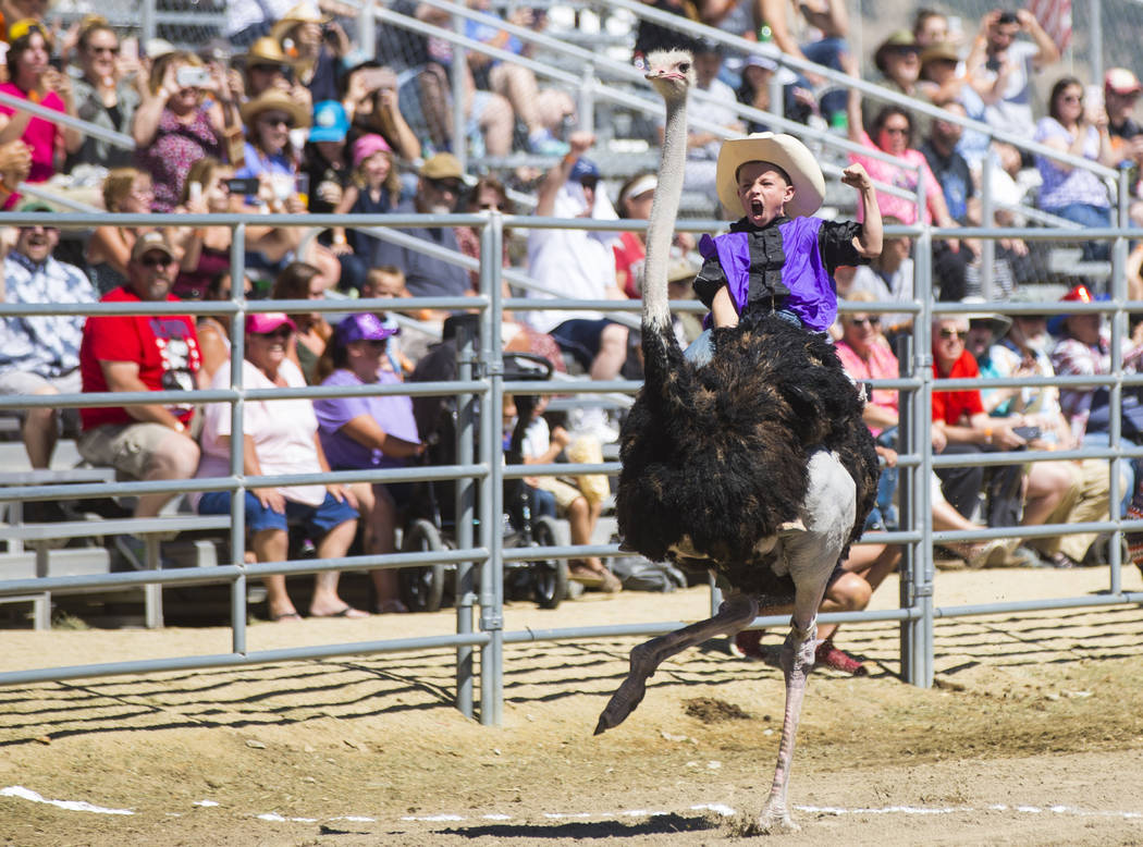 Ten-year-old Lian Hendrick races an ostrich to win a round during the first day of the 59th annual International Camel & Ostrich Races in Virginia City on Friday, Sept. 7, 2018. Chase Stevens Las ...