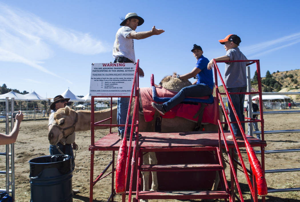 Review-Journal reporter Colton Lochhead, center right, prepares to ride a camel before racing in the 59th annual International Camel and Ostrich Races in Virginia City on Friday, Sept. 7, 2018. Ch ...