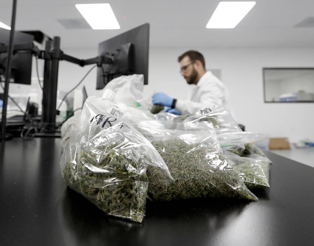 In this Wednesday, Aug. 22, 2018, photo, marijuana samples are piled up for testing at Cannalysis, a cannabis testing laboratory, in Santa Ana, Calif. Nearly 20 percent of the marijuana and mariju ...