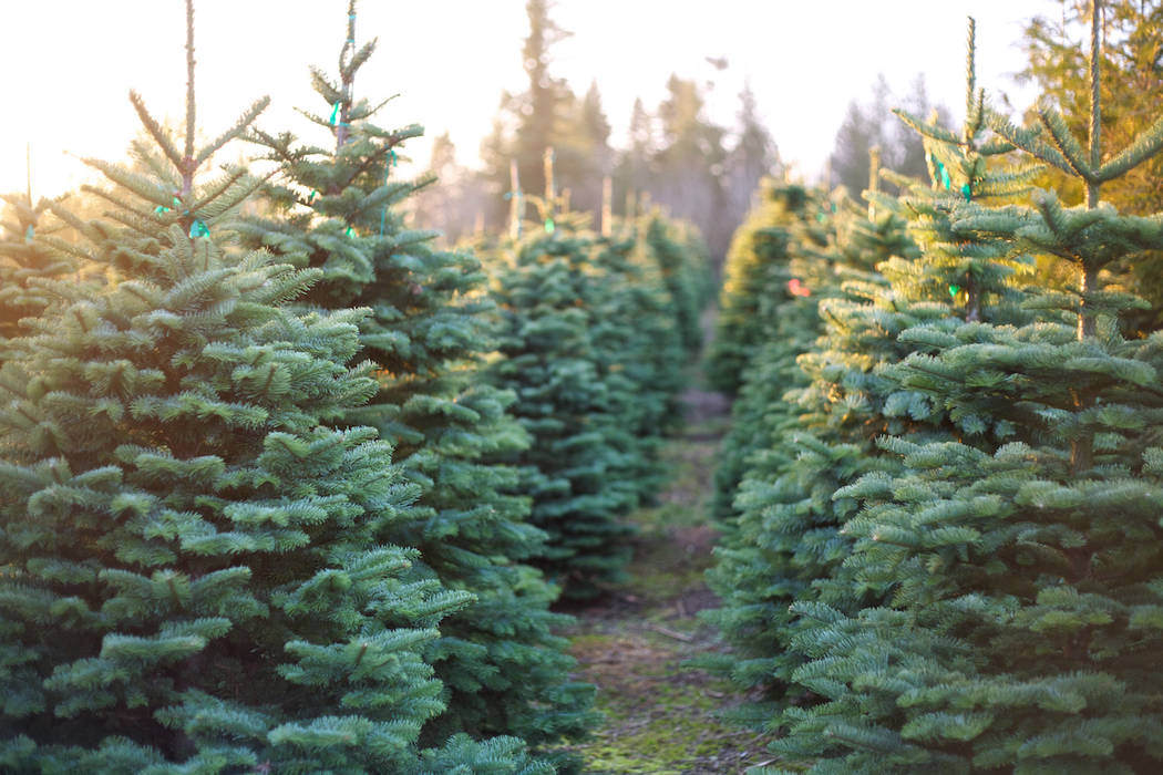 a christmas tree farm getty images