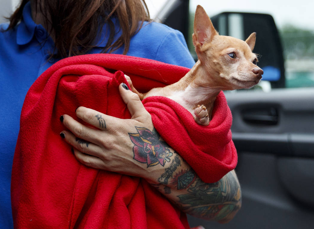 Laura Gretch, Humane Rescue Alliance transport manager, holds Frances, an 8-year-old Chihuahua mix who is one of the 26 cats and dogs arriving at Humane Rescue Alliance in Washington, Tuesday, Sep ...
