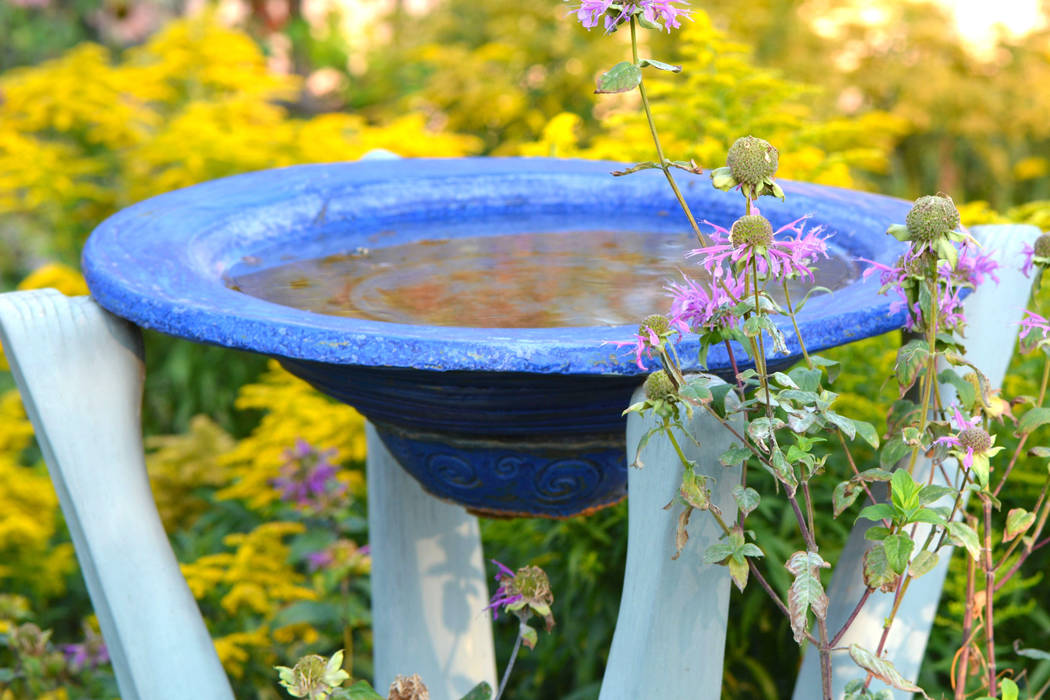 Invite birds into the garden by hanging a feeder or choosing a water feature with birds in mind. (Thinkstock)