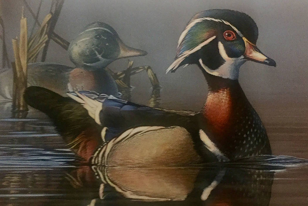 Judges selected Freeport, Minnesota artist Scot Storm's acrylic painting of a wood duck and a wooden decoy as the winner of the Federal Duck Stamp Art Contest on Saturday, Sept. 15, 2018, at Sprin ...