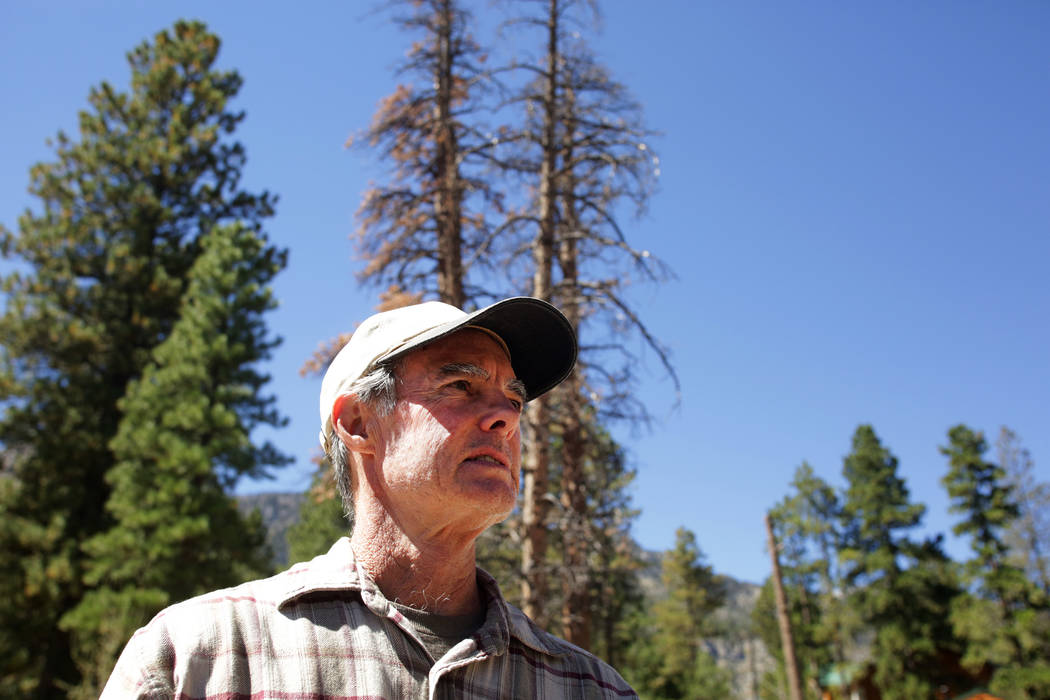 Mount Charleston resident, Tom Padden, stands in front of two of the hundreds of trees he says were poisoned by the salt being used by Clark County Public Works to de-ice roads around Mount Charle ...