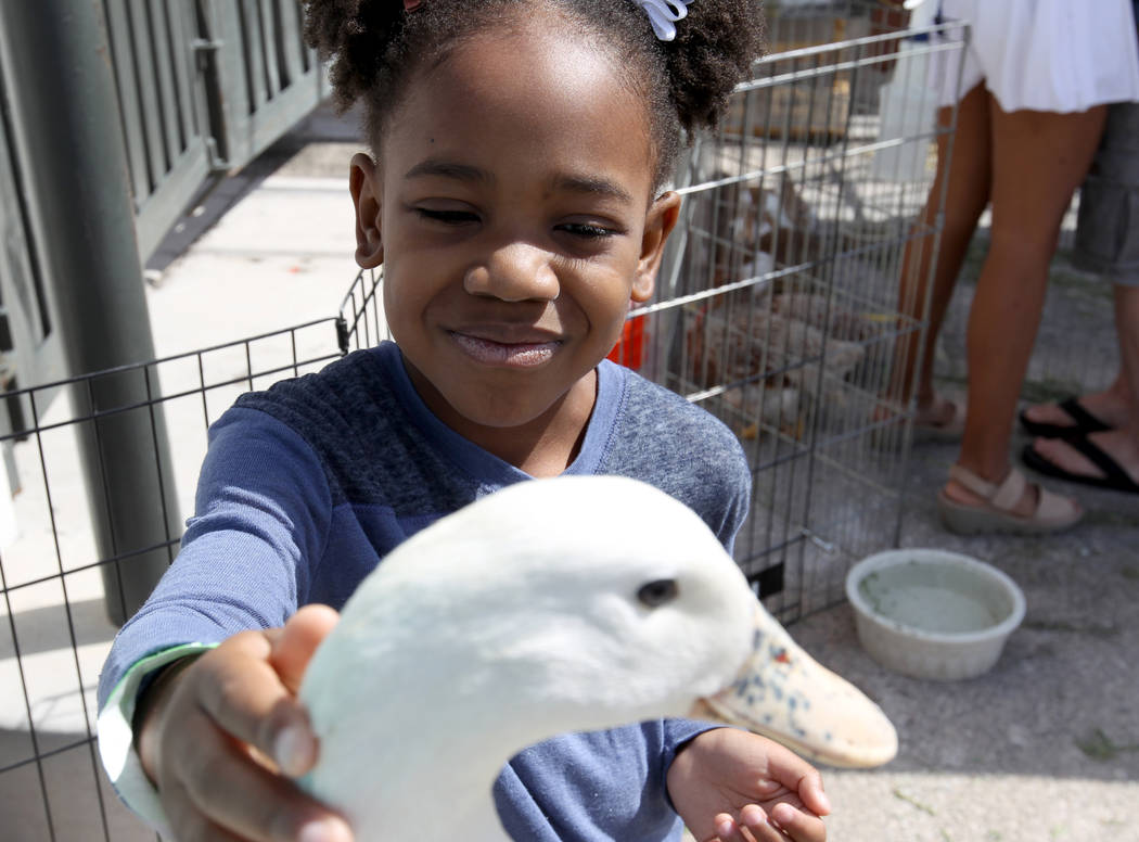 Kherrington Griffin, 6, in the petting zoo at 9th Bridge School 3rd annual Kidz Street STEAM-inspired block party presented by Zappos at The Lot at the Western in downtown Las Vegas Saturday, Oct. ...