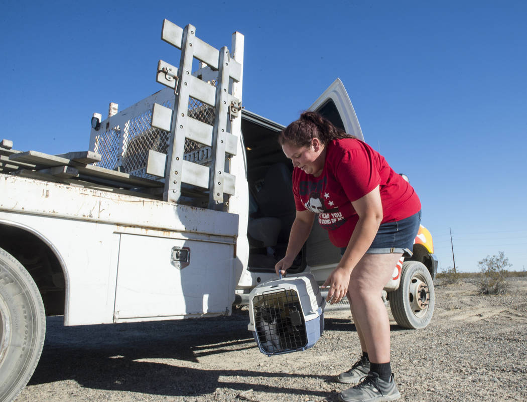 In preparation to move homeless resident Mary Supples' trailer and belongings to a different location, Nicole Olivas of Platinum Hauling picks up a carrier full of kittens to load into the truck t ...