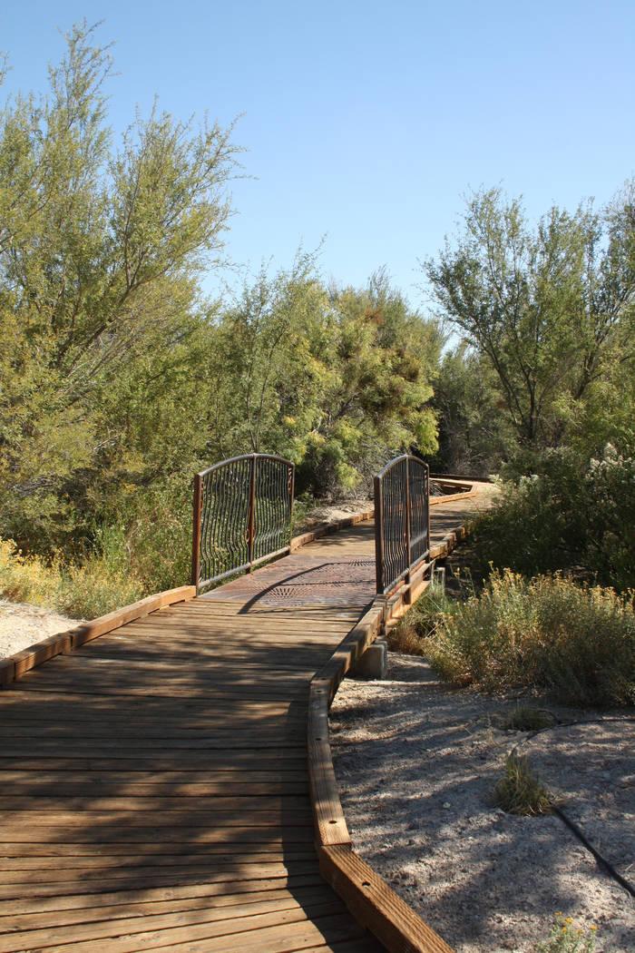 Boardwalks can be found throughout Ash Meadows National Wildlife Refuge. (Deborah Wall/Las Vegas Review-Journal)