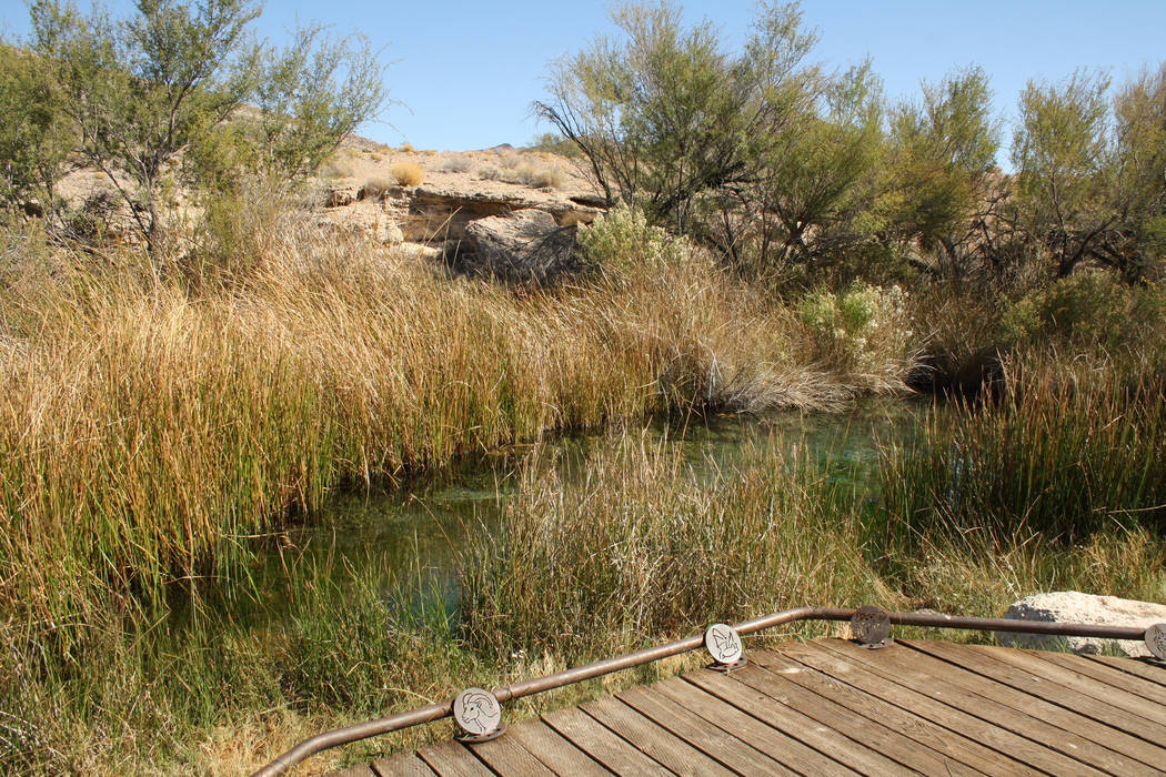 The King's Pool can be found in the Point of Rocks area at Ash Meadows. Desert bighorn sheep can sometimes be seen here. (Deborah Wall/Las Vegas Review-Journal)