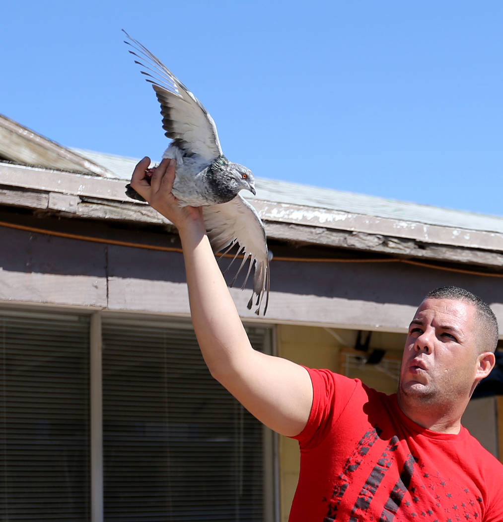 Rasiel Martinez whistles and waves one of his pigeons to attract an arriving pigeon on the Cher Ami leg of the Racing Pigeon Cross Country Relay from Victorville, Calif. to Las Vegas Thursday, Oct ...