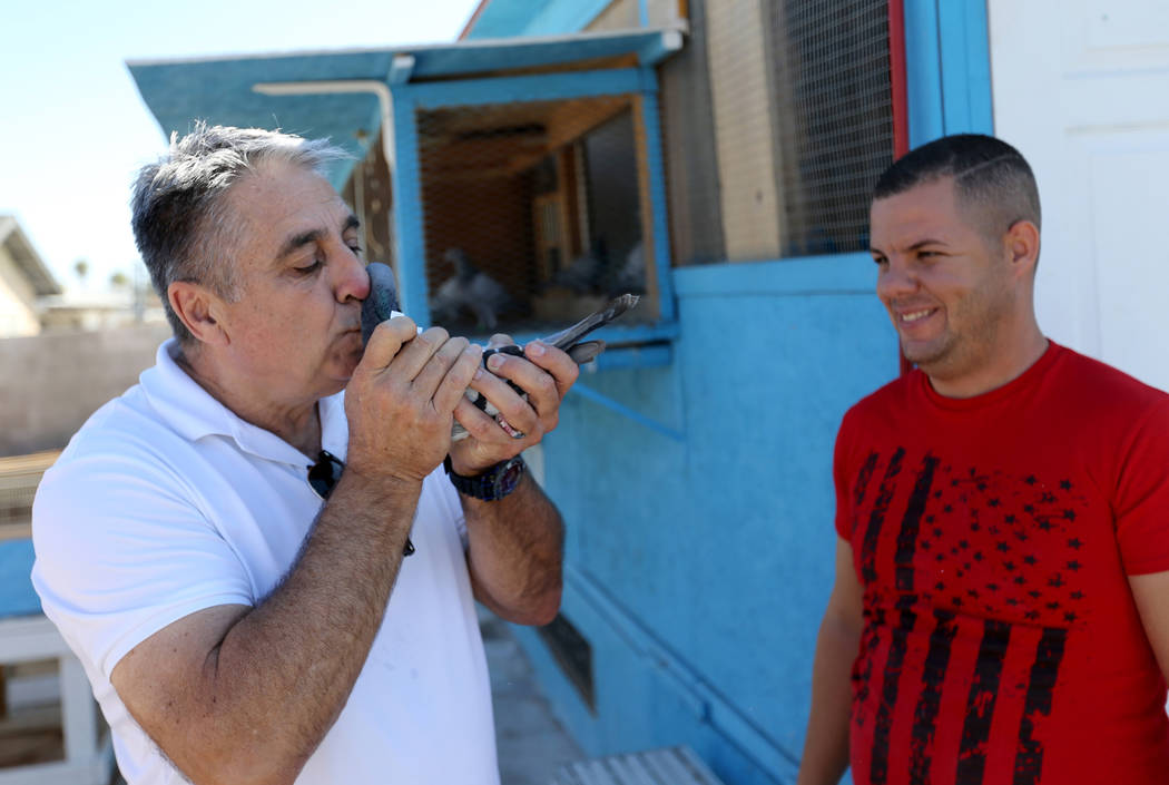 Vincent Valenzuela, left, and Rasiel Martinez check out a pigeon that just arrived in Las Vegas from Victorville, Calif. on the Cher Ami leg of the Racing Pigeon Cross Country Relay Thursday, Oct. ...